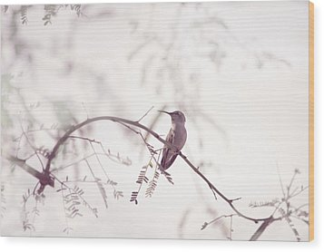 Desert Hummingbird II Wood Print by Carolina Liechtenstein