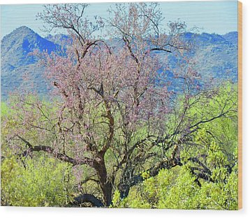 Desert Ironwood Beauty Wood Print