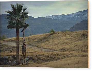 Desert Palm Giraffe 001 Wood Print by Guy Hoffman