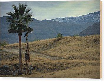 Desert Palm Giraffe 001 Wood Print