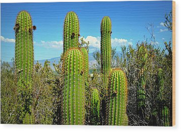 Wood Print featuring the photograph Desert Plants - All In The Family by Glenn McCarthy
