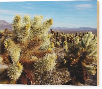 Wood Print featuring the photograph Desert Plants - Porcupine Cholla by Glenn McCarthy
