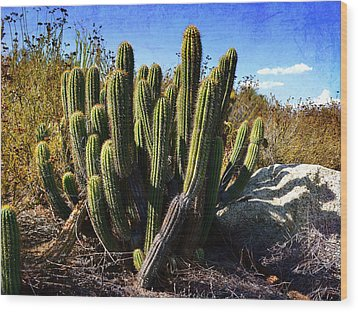 Wood Print featuring the photograph Desert Plants - The Wild Bunch by Glenn McCarthy