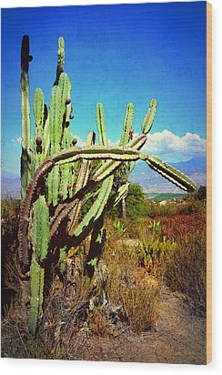 Wood Print featuring the photograph Desert Plants - Westward Ho by Glenn McCarthy