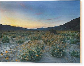 Desert Sunflower Sunset Wood Print by Scott Cunningham