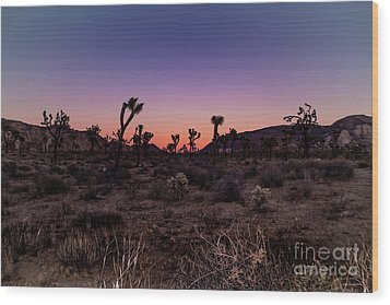Desert Sunrise Joshua Tree National Park Wood Print