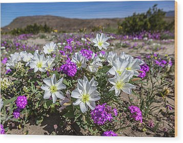 Wood Print featuring the photograph Desert Super Bloom 2017 by Peter Tellone