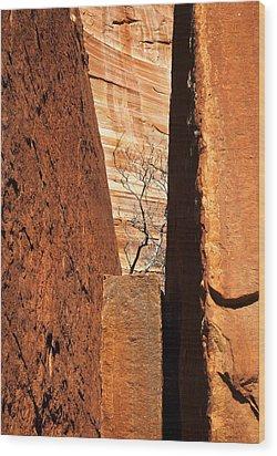 Desert Vise Wood Print by Mike  Dawson