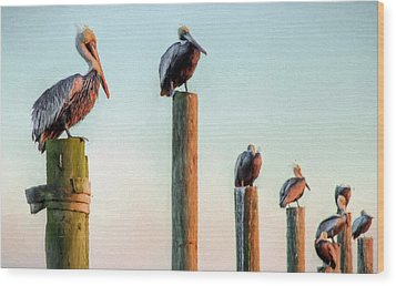 Destin Pelicans-the Peanut Gallery Wood Print