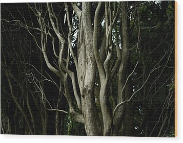 Detailed View Of The Branches Of A Tree Wood Print by Todd Gipstein