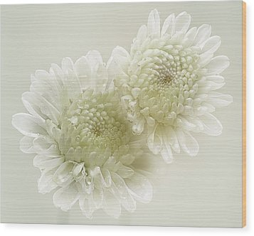 Dew Drops On White Chrisantemus Wood Print by Flower photography by Viorica Maghetiu