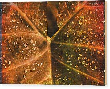 Dew Drops Wood Print by Susanne Van Hulst