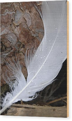 Dew On A Feather Wood Print by Robert Lacy
