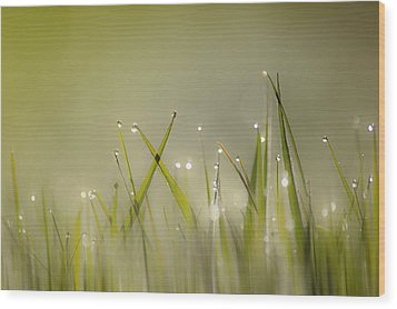 Dew On Grass Wood Print