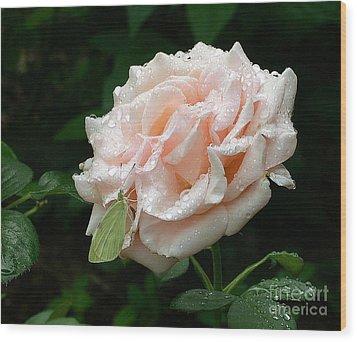Dewdrops On A Rose Wood Print by Addie Hocynec