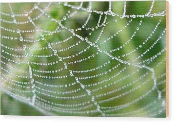 Dewdrops  Wood Print