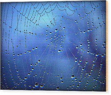 Dewed Web II Wood Print