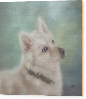 Wood Print featuring the mixed media Diamond, The White Shepherd by Colleen Taylor