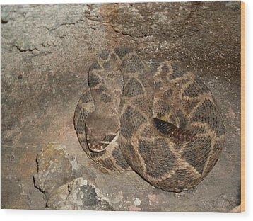 Diamondback Rattlesnake Wood Print by Warren Thompson