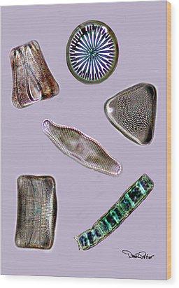 Diatoms Wood Print by David Salter