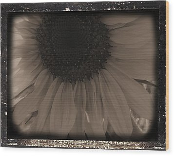 Diatrop Three Quarter Sunflower Wood Print by Sonya Chalmers