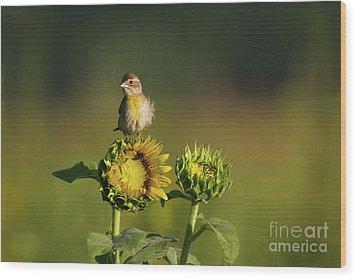 Dickcissel Sunflower Wood Print