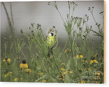 Dickcissel With Mexican Hat Wood Print by Robert Frederick