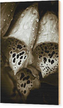 Digitalis Wood Print by Frank Tschakert
