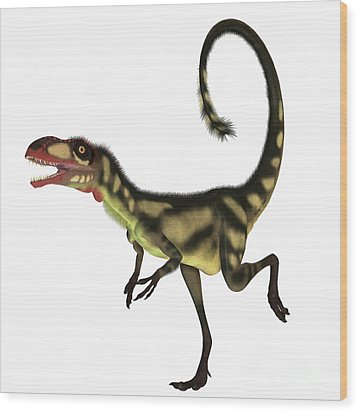 Dilong Dinosaur Profile Wood Print by Corey Ford