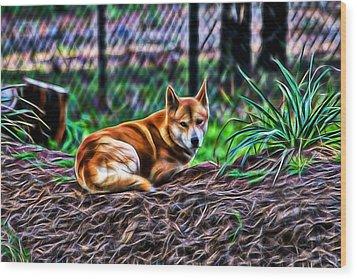 Dingo From Ozz Wood Print