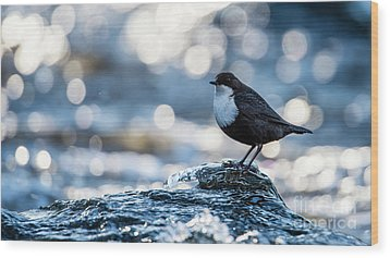 Dipper On Ice Wood Print by Torbjorn Swenelius