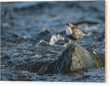 Dipper On The Rock Wood Print by Torbjorn Swenelius