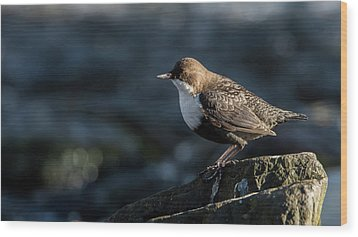 Wood Print featuring the photograph Dipper by Torbjorn Swenelius