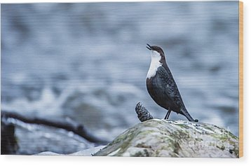 Wood Print featuring the photograph Dipper's Call by Torbjorn Swenelius