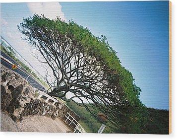 Disoriented Tree Wood Print by Judyann Matthews