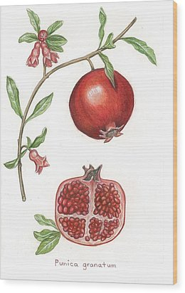 Dissection Of A Pomegranate Wood Print