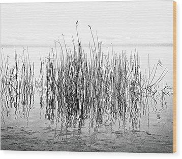 Distortion  Wood Print by Karen Stahlros