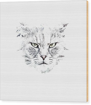 Disturbed Cat Wood Print by Everet Regal