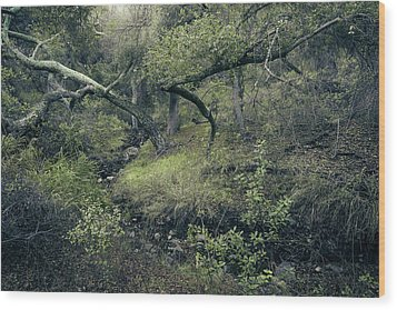 Wood Print featuring the photograph Ditch And Oaks by Alexander Kunz