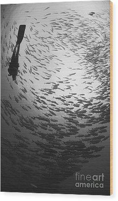 Diver And A Large School Of Bigeye Wood Print by Steve Jones