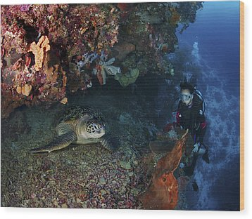 Diver And Sea Turtle, Manado, North Wood Print by Mathieu Meur