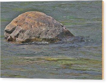 Diving Turtle Rock - Flathead River Middle Fork Mt Wood Print by Christine Till