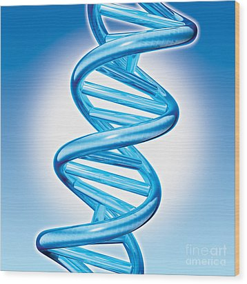 Dna Double Helix Wood Print by Marc Phares and Photo Researchers