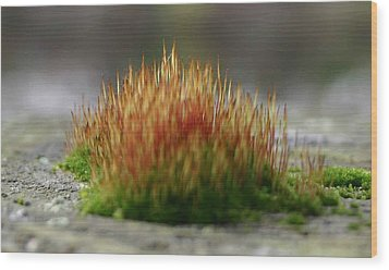 Wood Print featuring the photograph Dock Moss by Jack G  Brauer