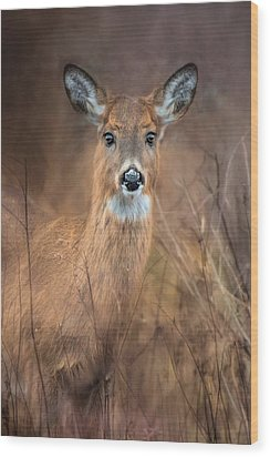 Wood Print featuring the photograph Doe A Deer by Robin-Lee Vieira