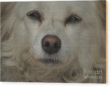 Dog 1 Wood Print