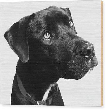 Dog Wood Print by Amanda Barcon