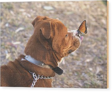 Dog And Butterfly Wood Print by John  Kolenberg