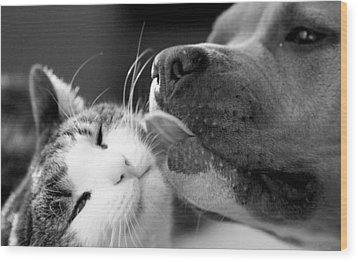 Dog And Cat  Wood Print by Sumit Mehndiratta