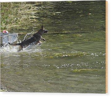 Dog Chasing His Stick Wood Print